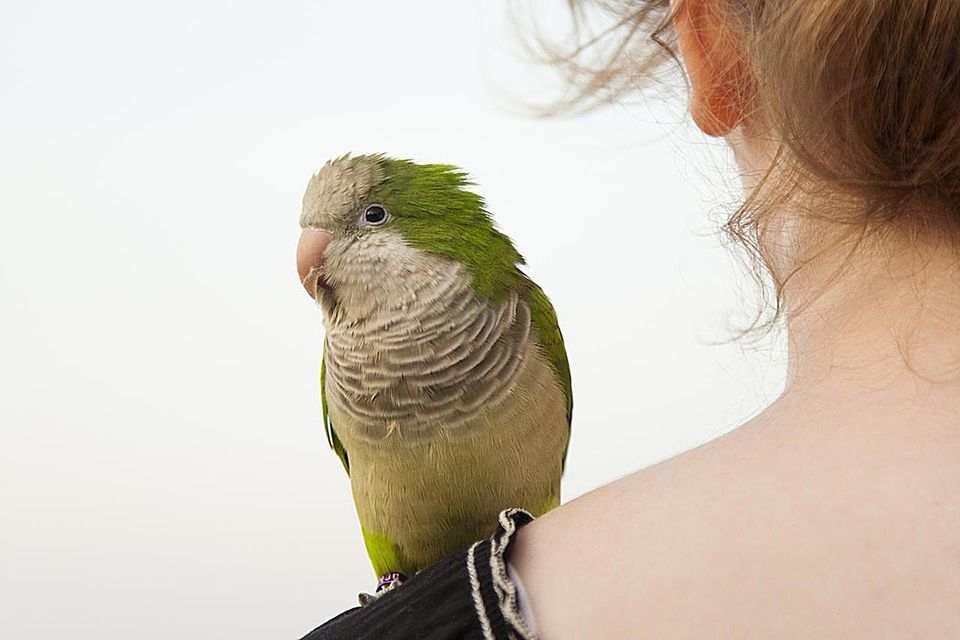 Woman with parrot on shoulder
