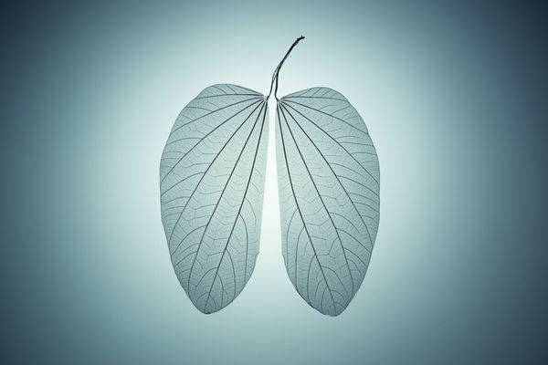 Lung Shape Leaf Skeleton