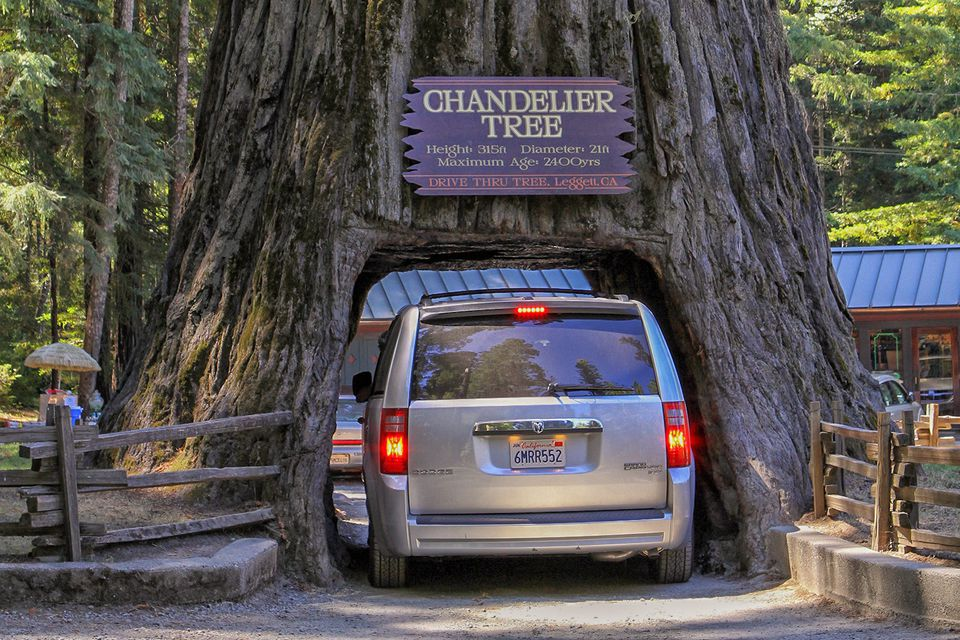 California Redwood Forests: Where to See the Big Trees