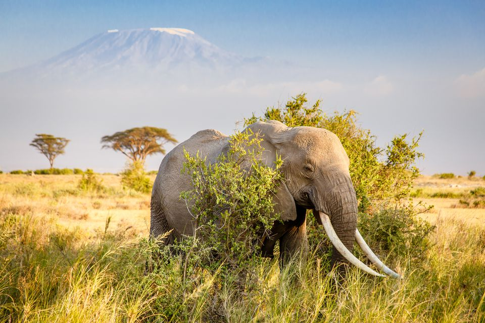 Fun Facts About the African Continent