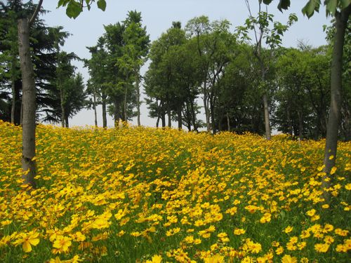Summer flowers bloom in a Shanghai park