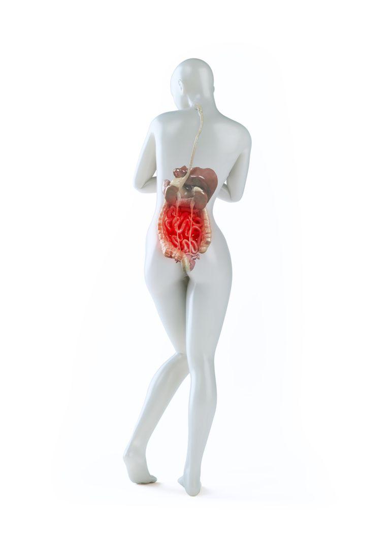 Plantas medicinales para problemas de riñón