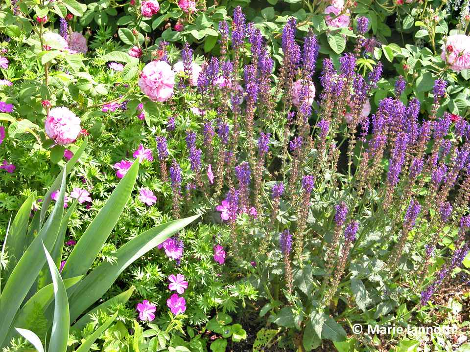 How to Plant a Cottage Garden