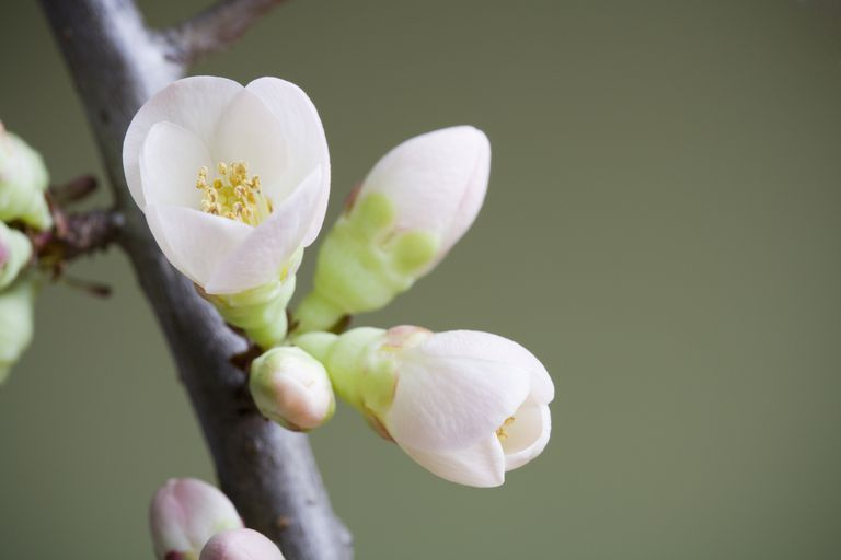 I got You're In The Flowering Stage. Parts of a Flowering Plant Quiz