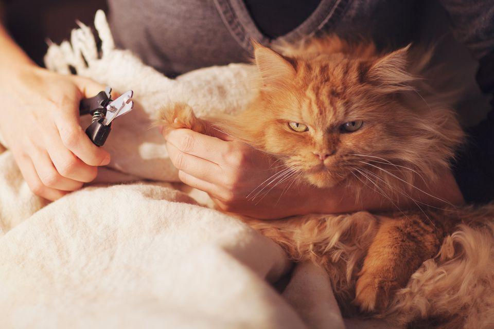 Cat's getting a claw trim