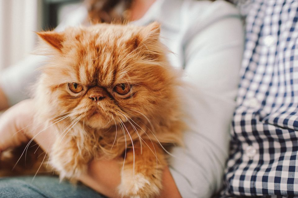 does cat fur color influence personality?