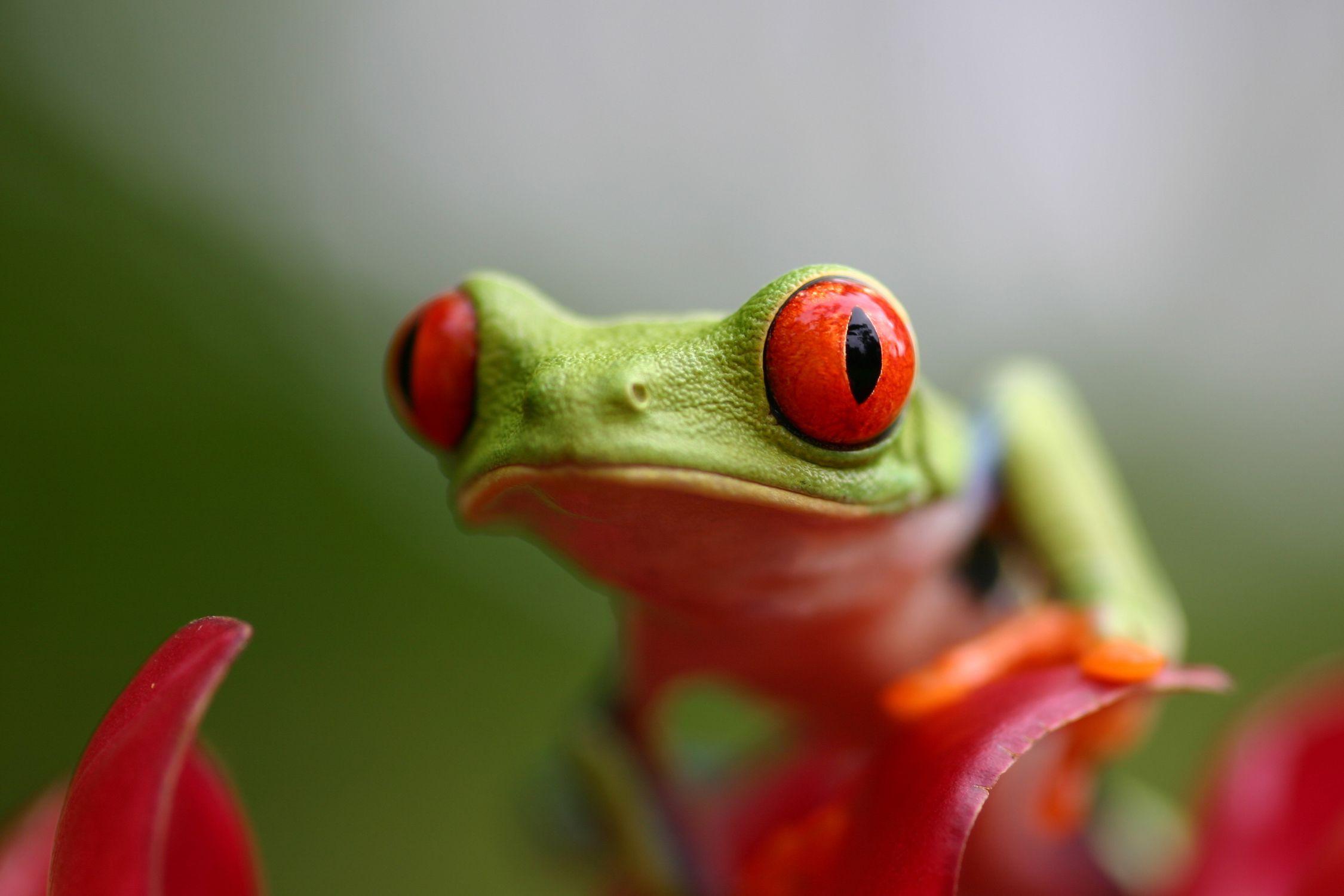 the 3 basic amphibian groups