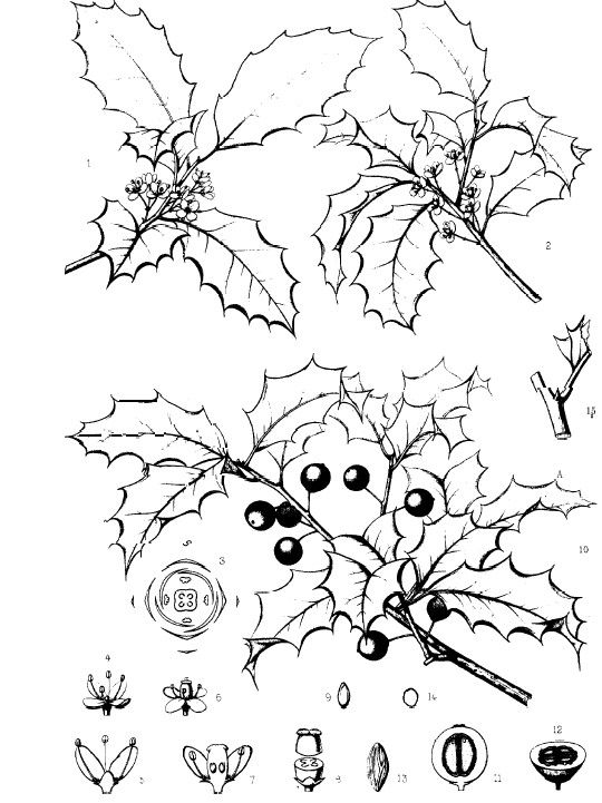 Common trees of the eastern united states sciox Gallery