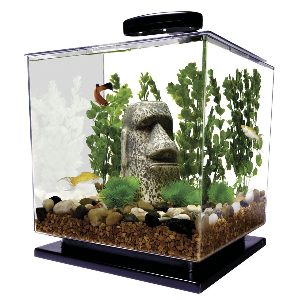 Mini aquariums pros and cons of small fish tanks for Cool small fish tanks