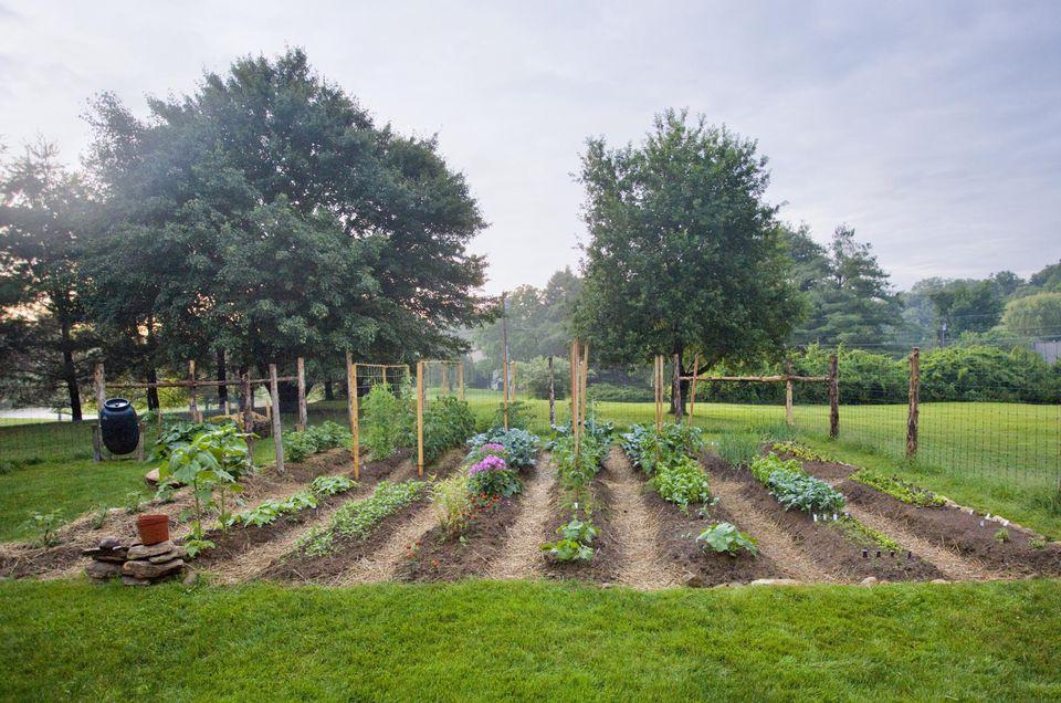 Vegetable garden with seedlings