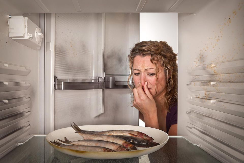A woman holds her nose as she finds a plate of smelly old fish in a dirty refrigerator.