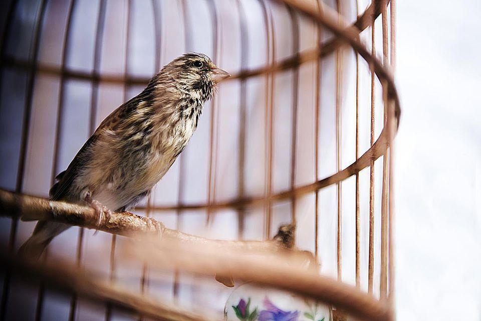 Close up of a bird sitting in an orange antique bird cage