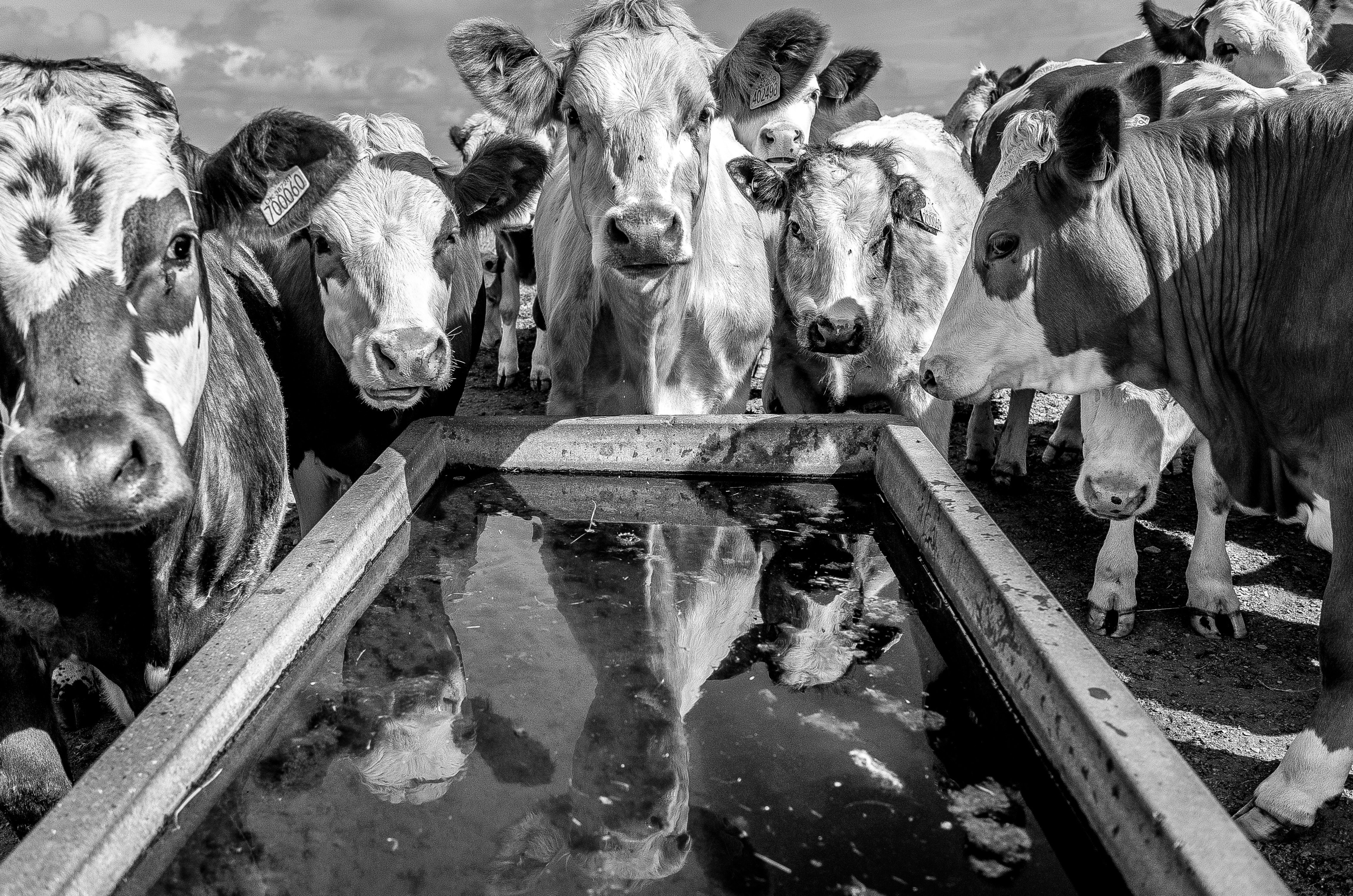 How Eating Meat Affects Resources And The Environment