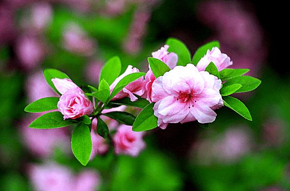 Foto de una flor en un jardín botánico