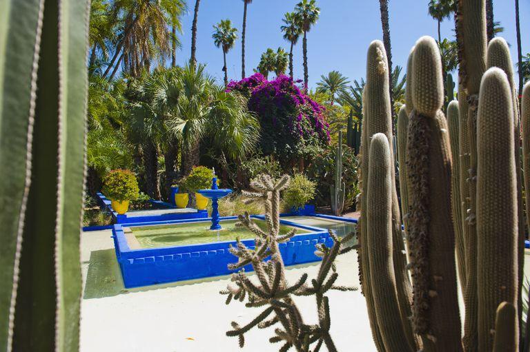 Crea un jard n mediterr neo for Plantas jardin mediterraneo