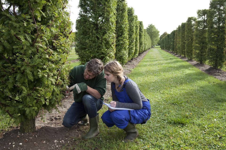 Student learn about pruning from an experienced mentor