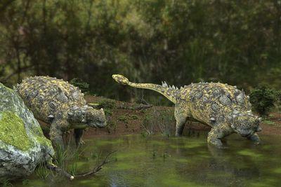 Facts About Ankylosaurus, the Armored Dinosaur