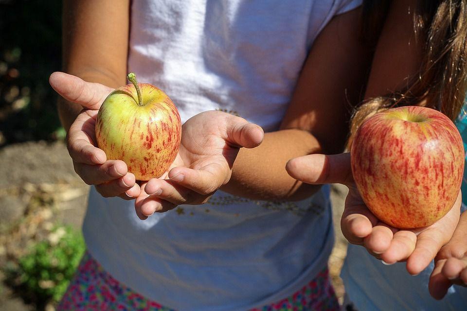 Children picking apples.
