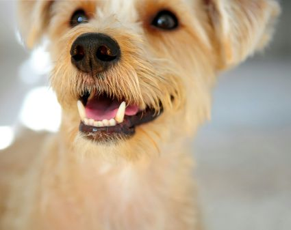 Neutering (Castration) in Dogs and Cats