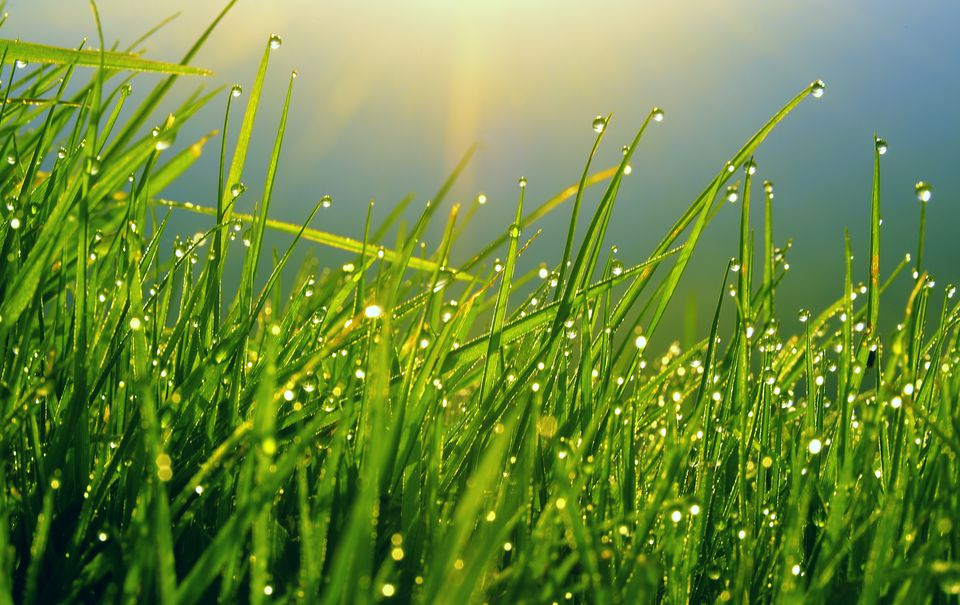 How To Grow A Greener Lawn And Become The Envy Of All