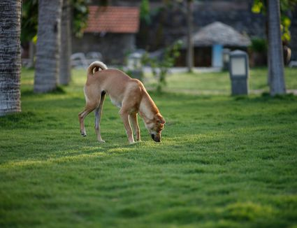 Cleaning Puppy Pee Stains And Why It Must Be Done Right