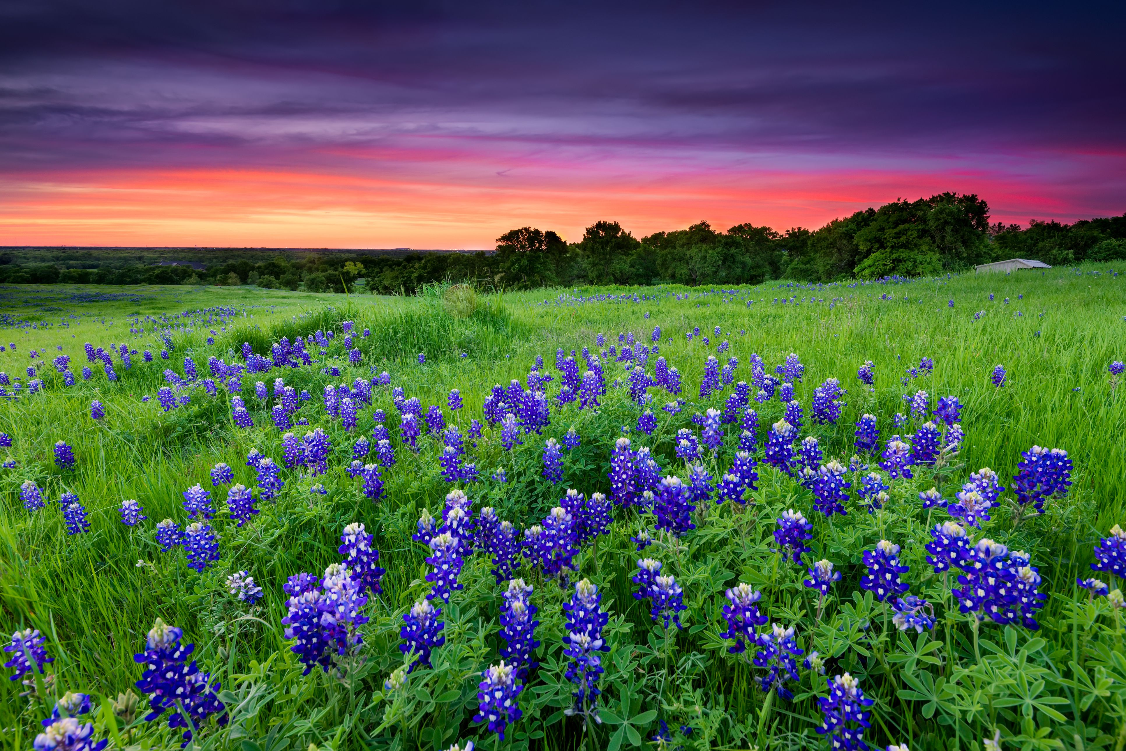 The Ultimate Hill Country Wildflower Getaway