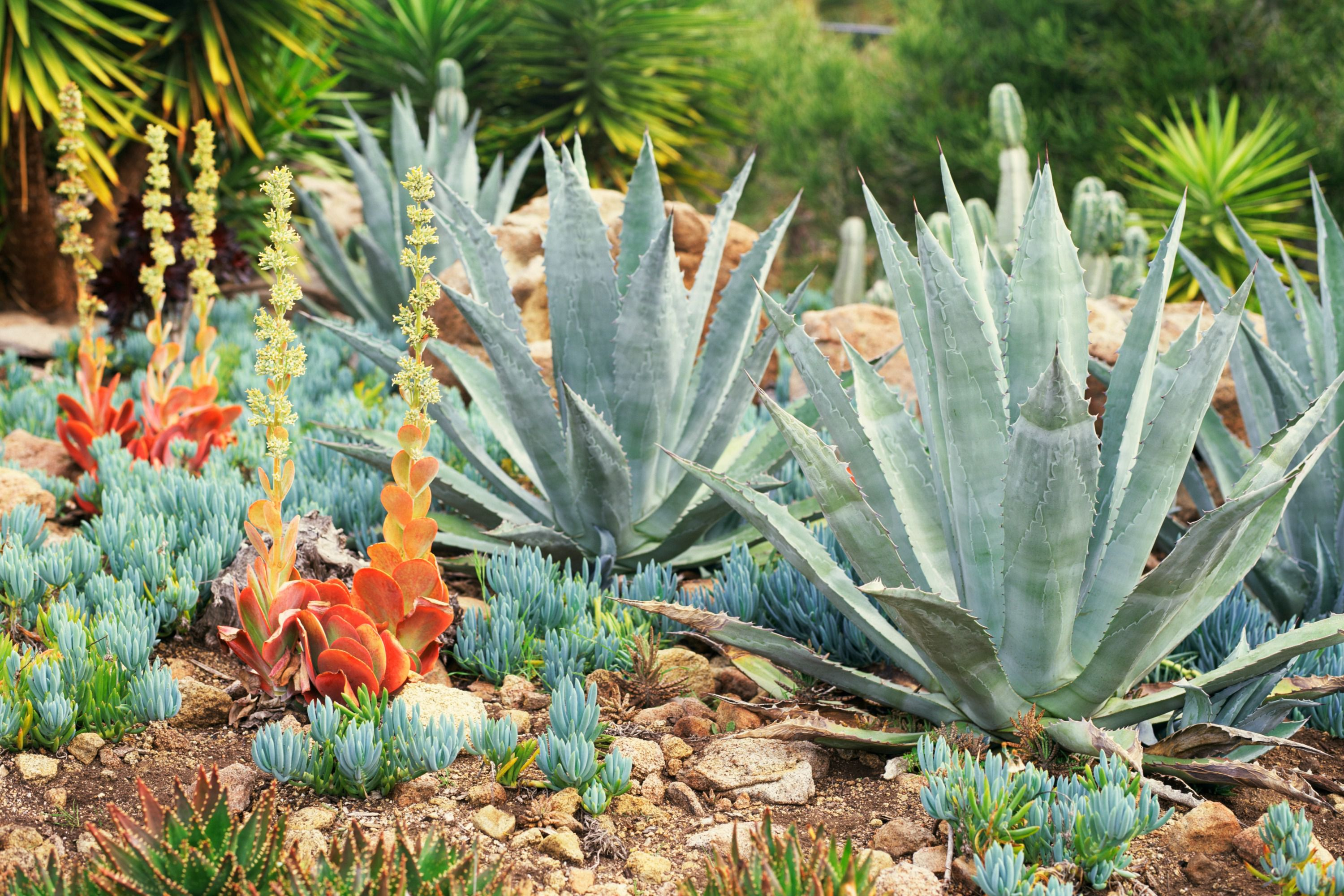 Choose the best succulents for landscaping for Best garden maintenance