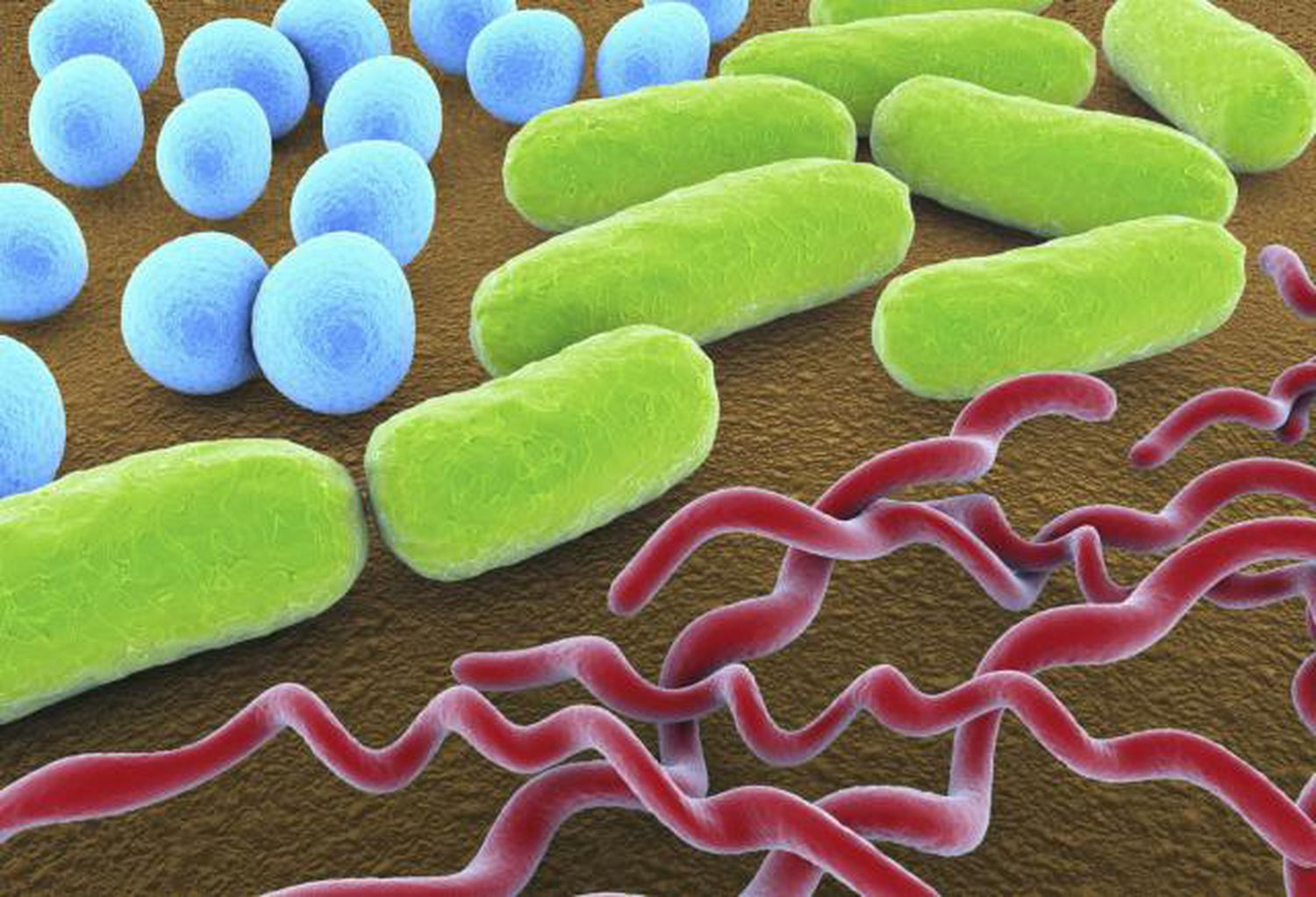 the characteristics and classification of the bacteria bacillus