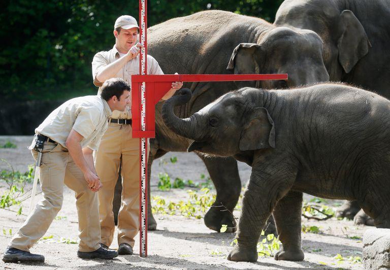 Hamburg Zoo Baby Animals Inventory