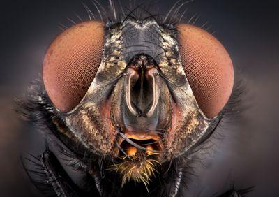 Get Rid Of Fruit Flies Homemade Fruit Fly Trap