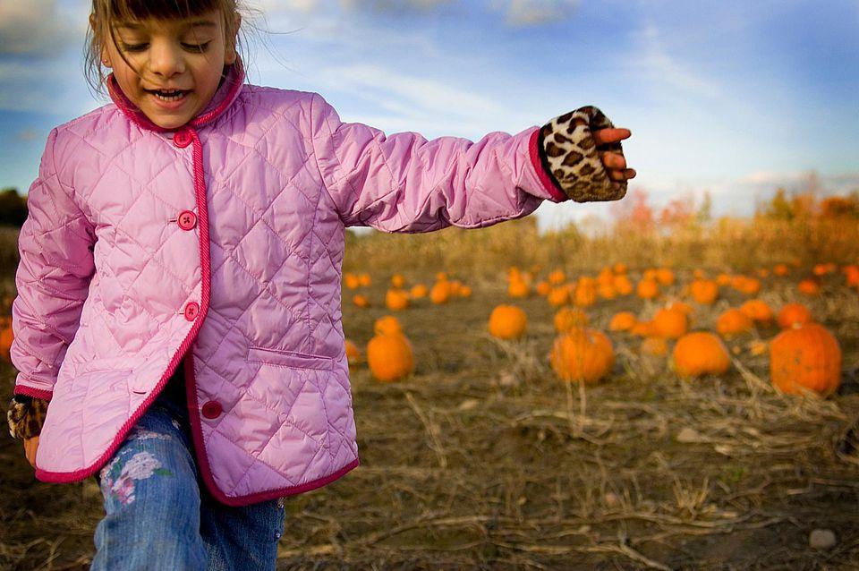 Pumpkin patches near Montreal.
