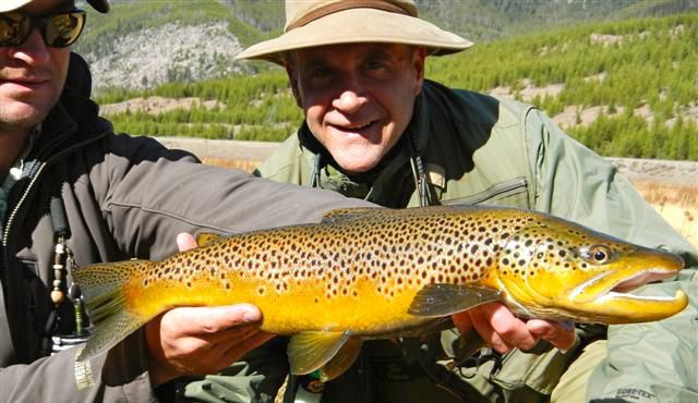 A whopper Montana brown trout.