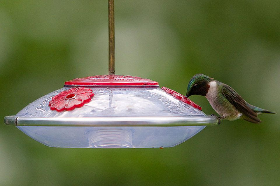 Saucer Hummingbird Feeder