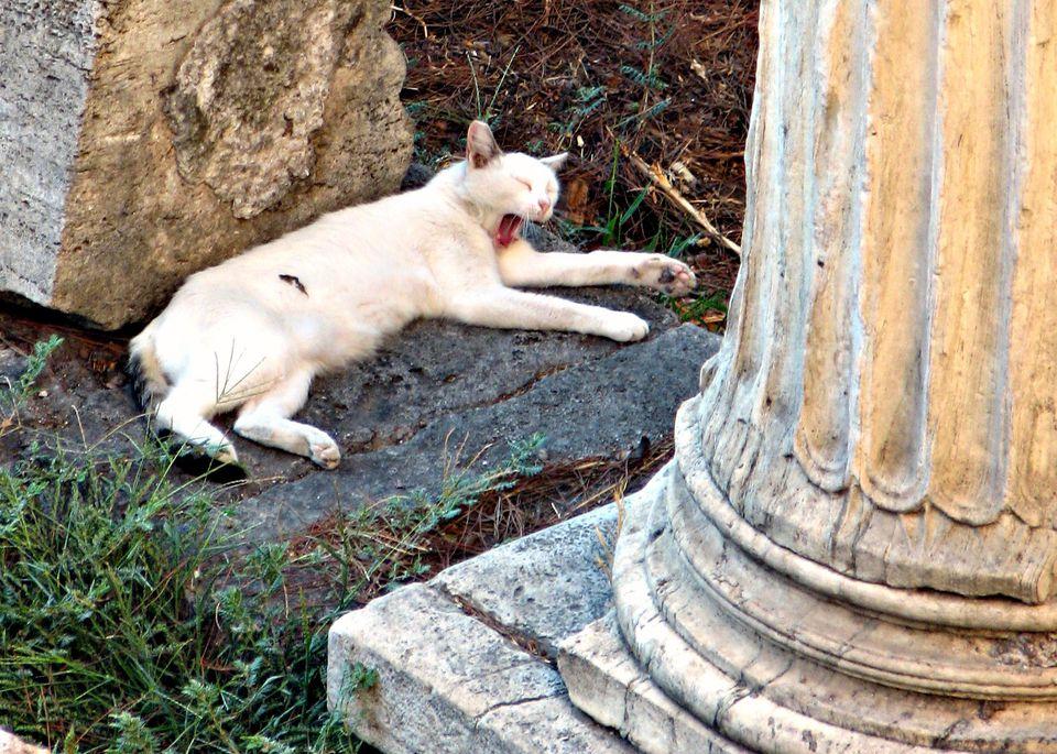 Roman Cat Sanctuary