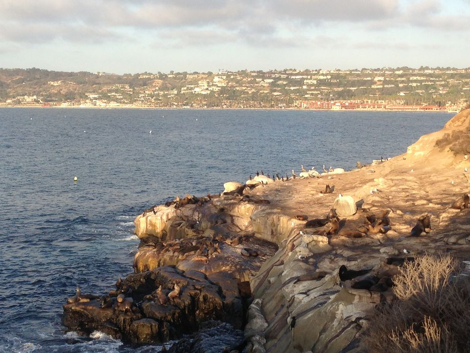 Seals and scenery at La Jolla Cove, a must-see site for first time visitors to San Diego.