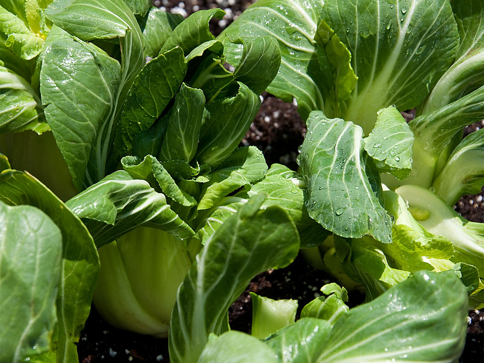 10 vegetables you can grow super fast