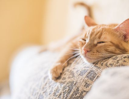 Natural Ways To Help Anxiety In Cats