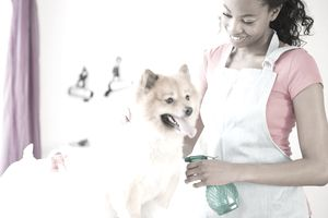 Start a Home Based Pet Business