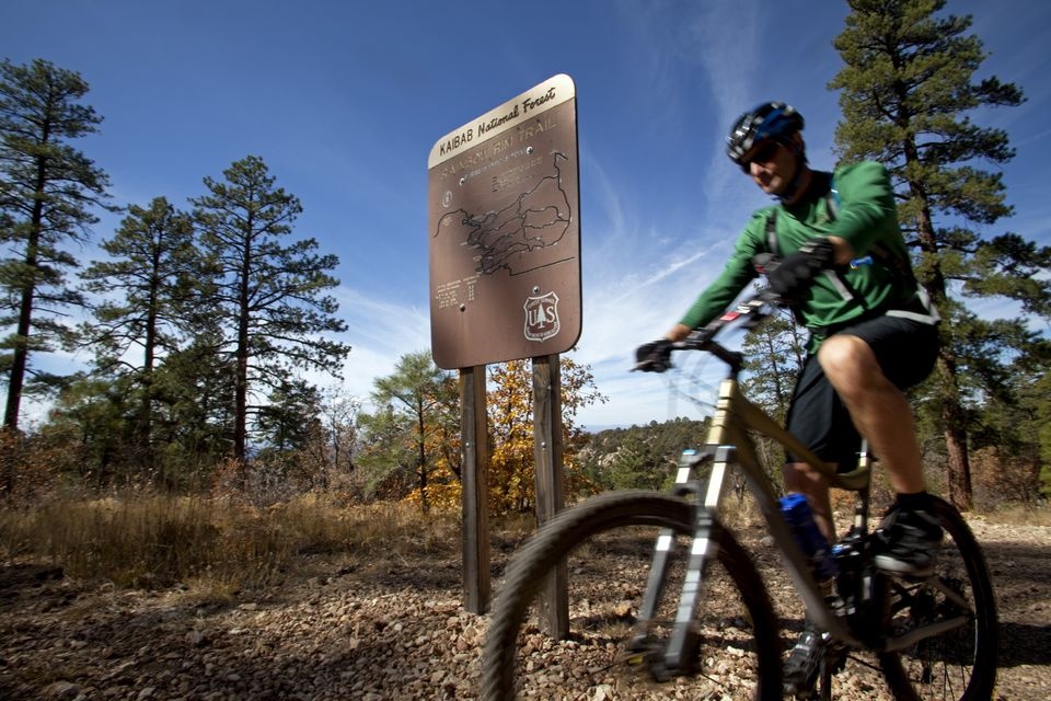 USA, Arizonia, Grand Canyon north rim, Kaibab National Forest. The vast expanse of national park areas away from the main tourist areas of the Grand Canyon provide a mountain biker mecca (MR)