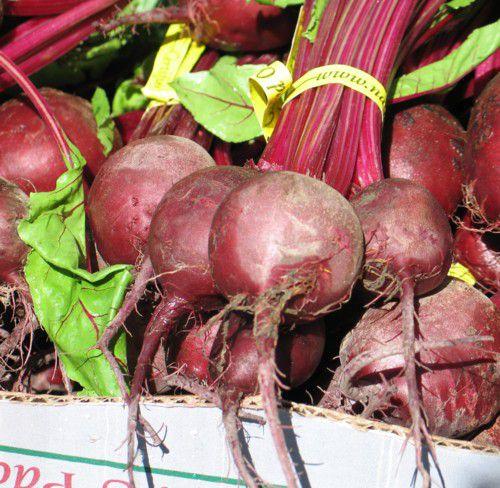 Growing Vegetables AZ