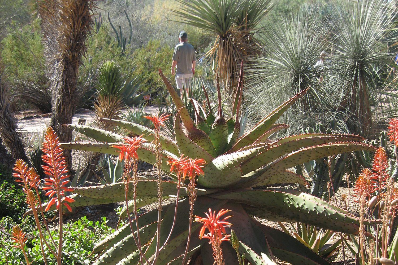 Desert Botanical Garden In Phoenix Arizona Visit Dbg Phoenix