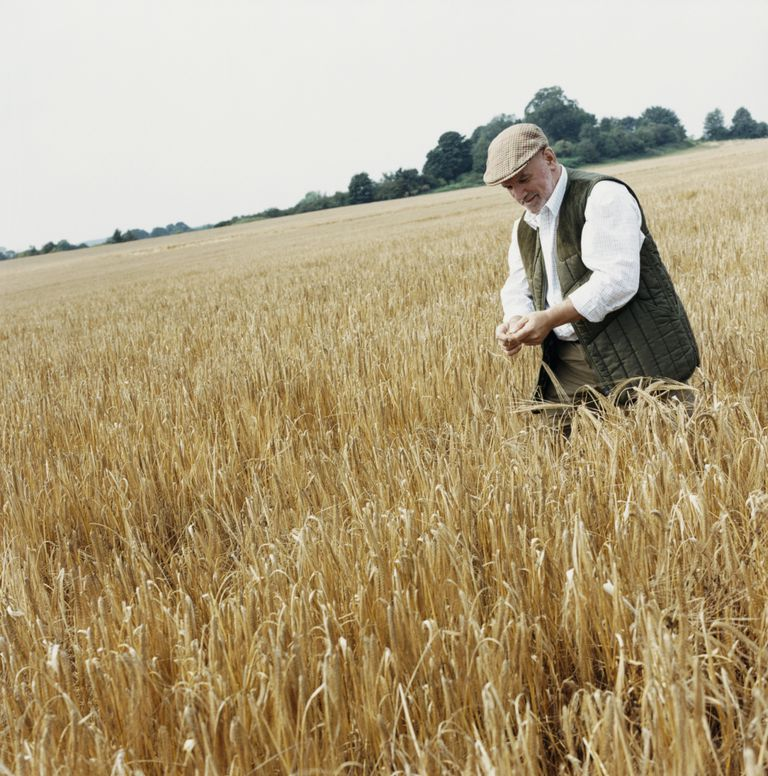man in ancient wheat field