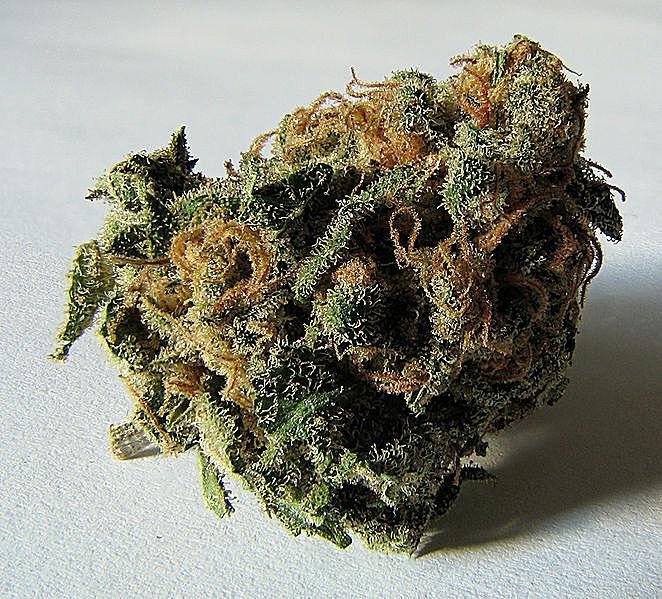Ganja - Marijuana - Cannabis