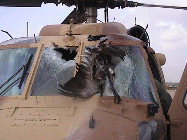 UH-60 after a bird strike