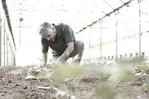 man gardening in greenhouse