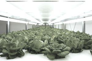 grow lights,indoor farming