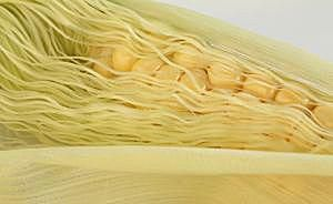 Corn Husks