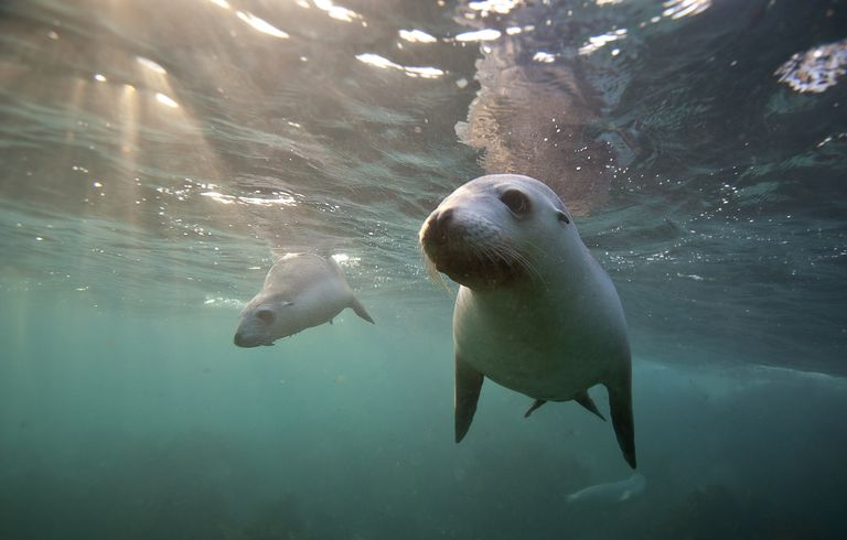 Two Baby Sea lions