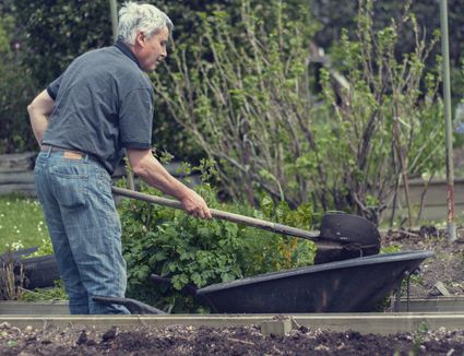 What To Put In Flower Beds To Keep Cats Out