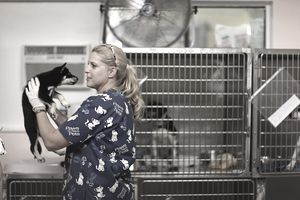 A volunteer for Paws to Save Pets